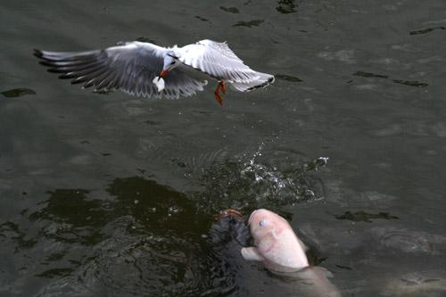 三ッ池公園の生存競争