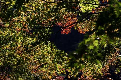 紅葉の色づく頃
