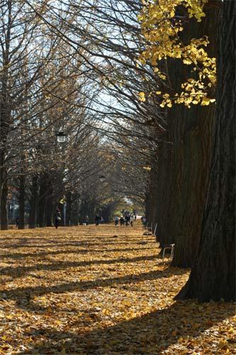 銀杏並木も葉を落として