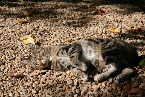 セザンヌの猫