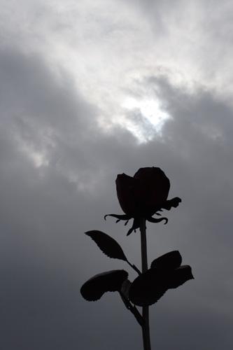 人工の薔薇