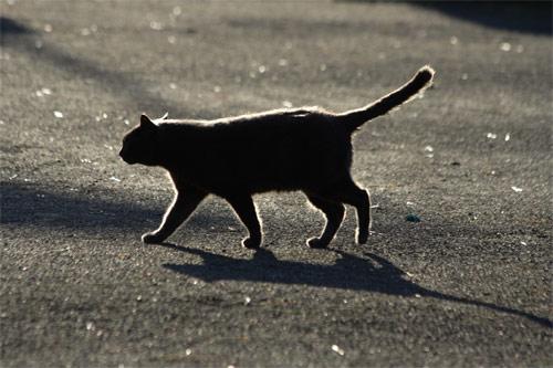 光の中を歩く黒猫