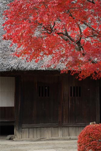 茅葺き屋根と紅葉
