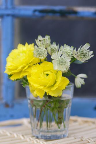黄色い花、青い窓枠