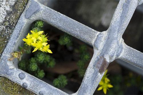 小さな花のささやき