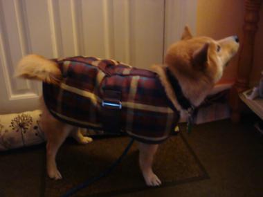 coat debut 3