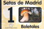 Setas_de_Madrid_1.jpg