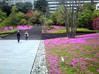 芝桜(その2)