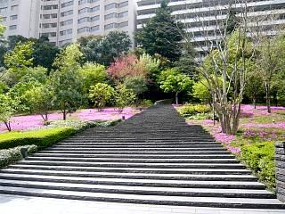 芝桜(アプローチその2)