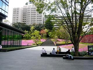 芝桜(アプローチその1)