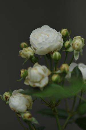 sneprinsesse2012620