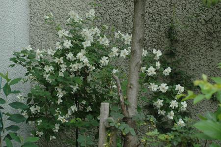 baikautsugi2012604-a.jpg