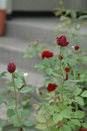 blackberrynip20101021-7.jpg