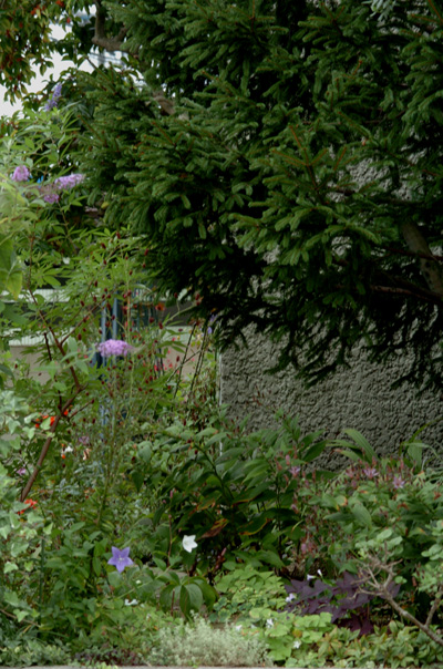 blueg20101014-1.jpg