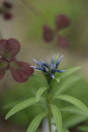 bluestar2012501.jpg