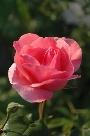 erizabeth2012505-3.jpg