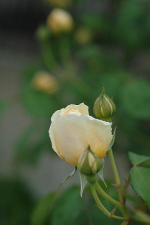 graham2012510.jpg