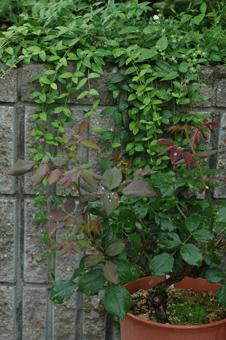 gruss2012615.jpg