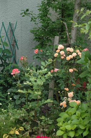 jardinsdefrance2012522-2.jpg