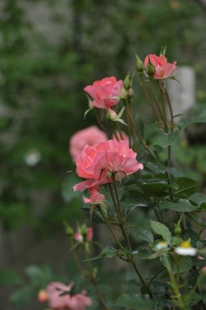 jardinsdefrance2012522-3.jpg