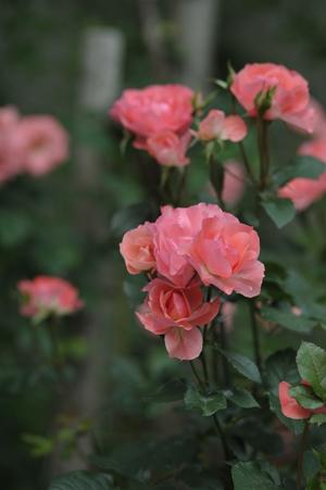 jardinsdefrance2012525.jpg