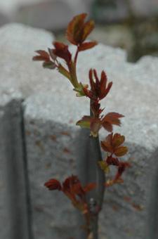 kougouseikin2012401-2.jpg