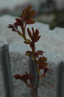 kougouseikin2012402-1.jpg