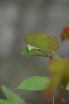 mushi2012421-1.jpg