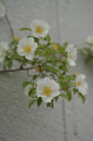 naniwa2012509-1.jpg
