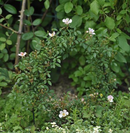 nozomi2012525.jpg