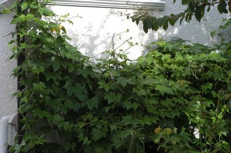 okisuzu2010901-2.jpg