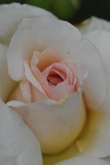 ophelia2012618.jpg