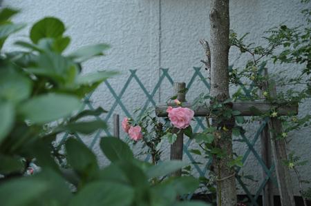 pinkg2012522-2.jpg
