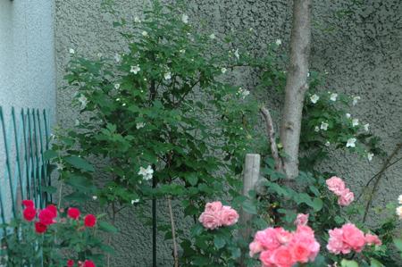 pinkg2012527-3.jpg