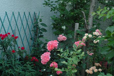 pinkg2012527-4.jpg