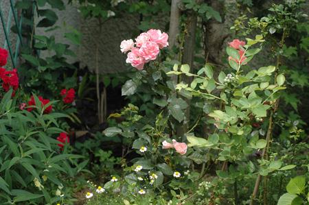 pinkg2012601-2.jpg