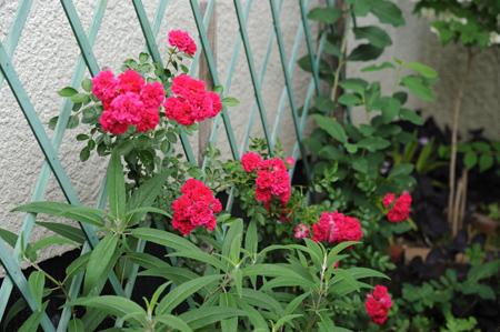 pinkg2012604-1.jpg