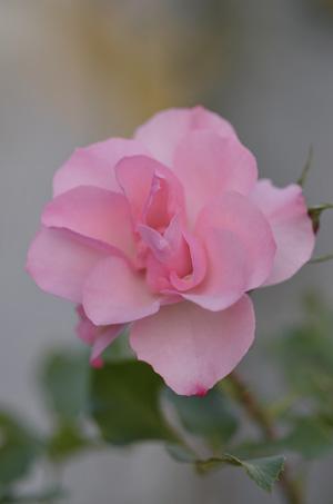 rosen20101129-2.jpg