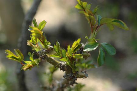 rosen2012408.jpg