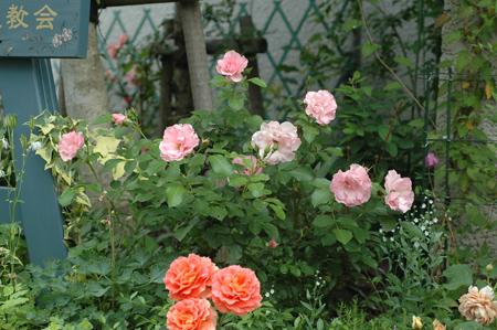 rosendolf2012526.jpg