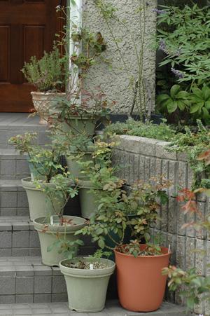 roses2010929-2.jpg