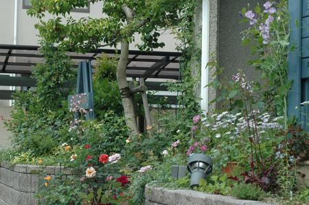 roses2012511-4.jpg