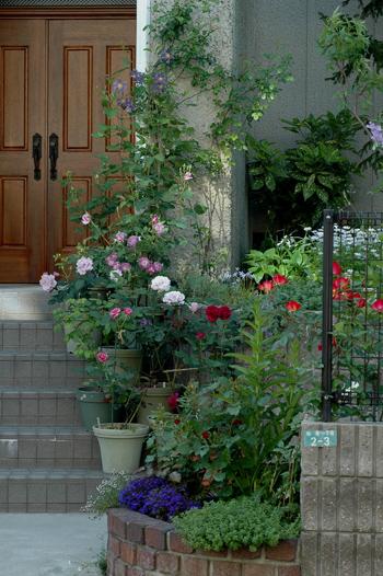 roses2012512-1.jpg