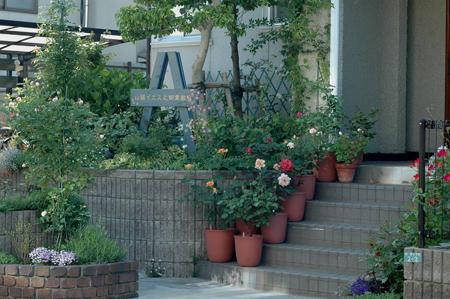 roses2012512-2.jpg
