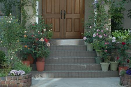 roses2012512-3.jpg