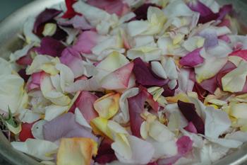 roses2012519.jpg