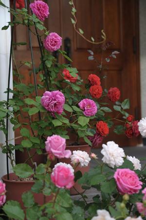 roses2012526.jpg