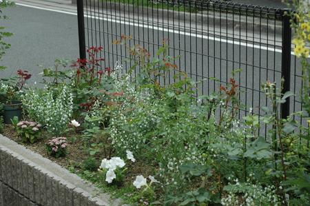 roses2012607-1.jpg