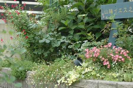 roses2012607-2.jpg