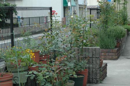 roses2012618-1.jpg